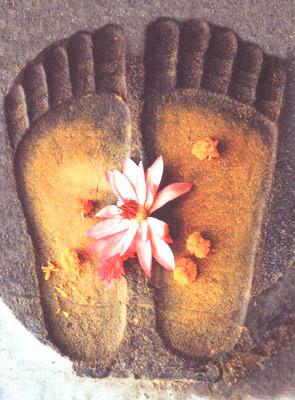 piedi, fiori